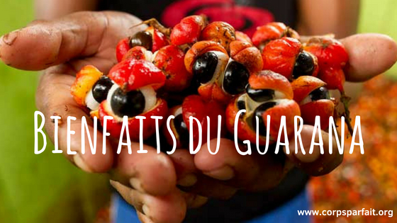 bienfait-guarana